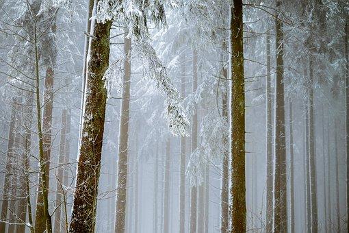 bild vinter