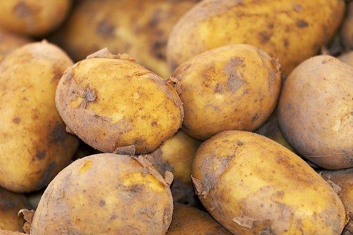 bild potatis